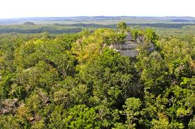 http://upload.wikimedia.org/wikipedia/commons/f/fc/Flickr_-_archer10_(Dennis)_-_Guatemala_1828_-_La_Danta_at_the_Mayan_site_of_El_Mirador.jpg