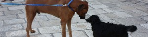The Whole Story On Dogs: Small vs. Big!