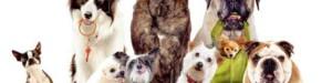 medium_dog_breeds