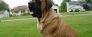 Carmella_Profile