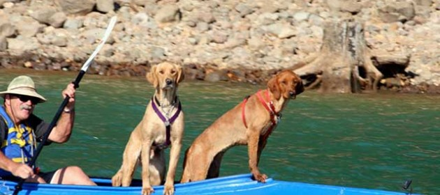 Kayaking Dogs on the Water