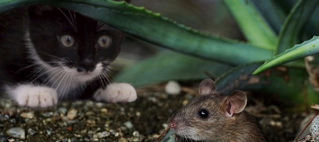 Best practices to keep mice and rats away